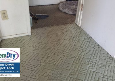 before and after chem-dry carpet cleaning