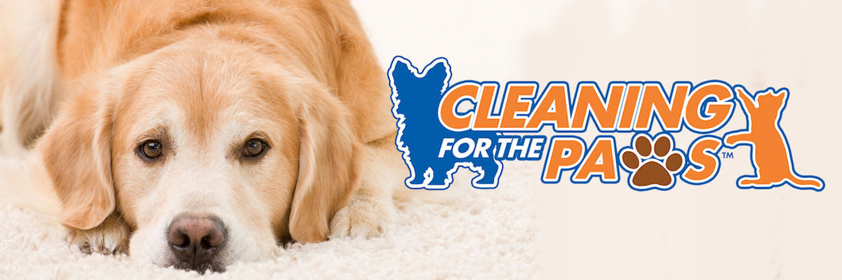 pet stain removal carpet cleaning los angeles