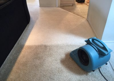 carpet cleaning in los angeles